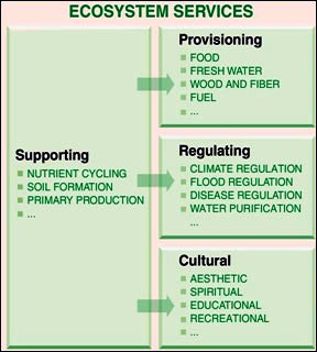 Ecosystem goods and services, Source: World Health Organisation (2012)